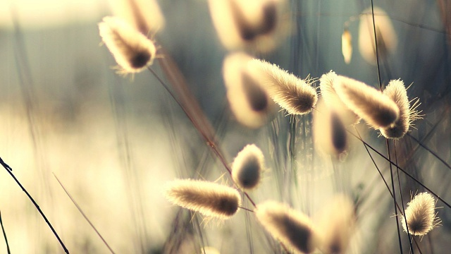 Galaxy S4 - Some Nice Wallpapers-fuzzy-grass.jpg