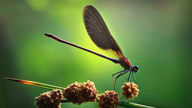 Galaxy S4 - Some Nice Wallpapers-dragon-fly.jpg