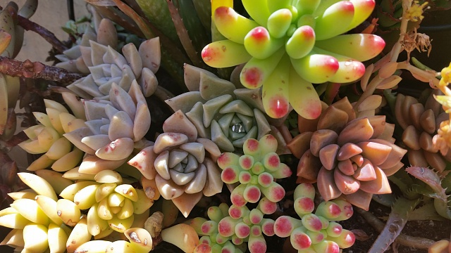 Share your Galaxy S5 camera photos, videos, and thoughts!-succulents.jpg