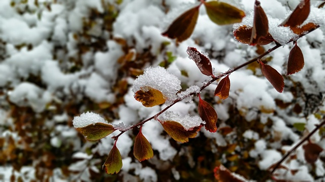 Share your Galaxy S5 camera photos, videos, and thoughts!-20141117_150546.jpg