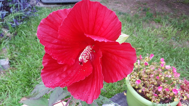 Galaxy S6A : Camera Shots! Show us your pictures-20150625_195014.jpg