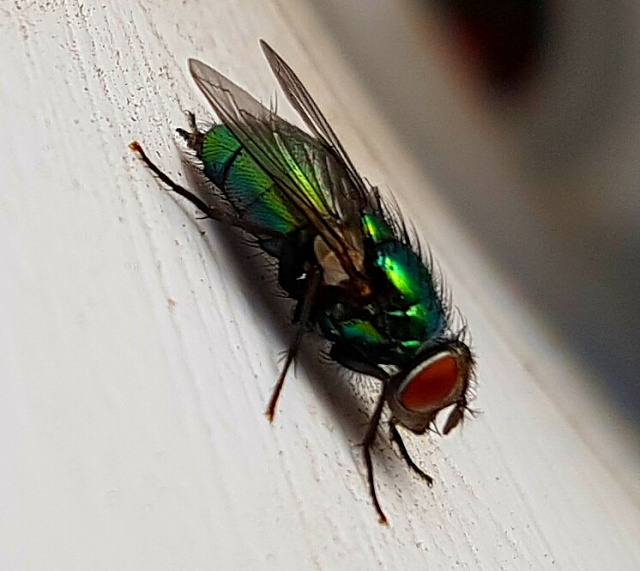 Photos taken with the S7/S7 Edge-green-fly.jpg