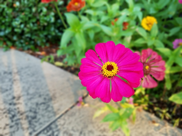 Photos taken with the S7/S7 Edge-poolflower2.jpg