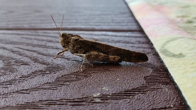 Post the last picture you took with your S8!-grasshopper.jpg
