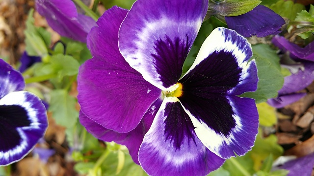 Pictures from the z3v Camera???-purple-flower.jpg
