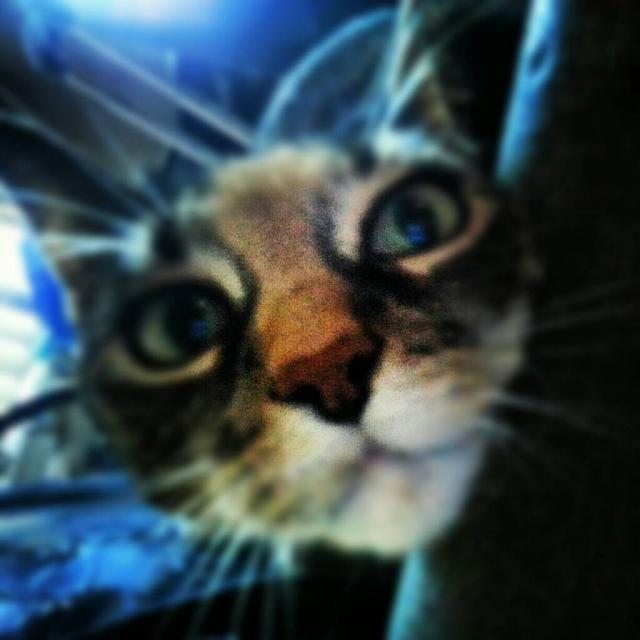 Sprint Galaxy S III : Camera Pictures.. Let's see them!-uploadfromtaptalk1352058522504.jpg