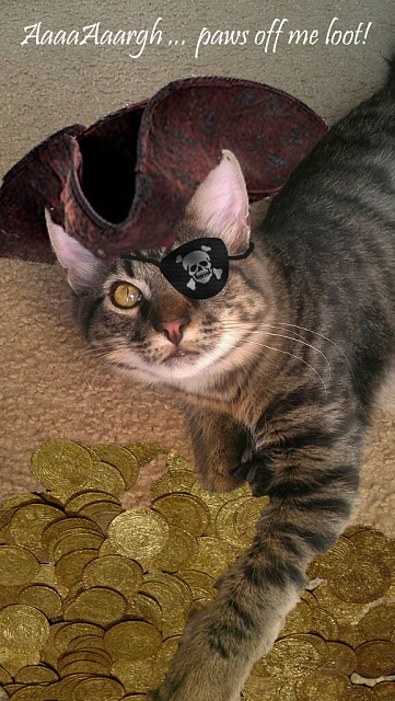 Photos Taken With Your Rezound Camera!-pirate_cat.jpg